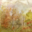 Vintage picture of the autumn forest — Stock Photo