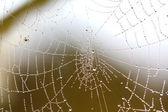 Beautiful Wide Web — Stock Photo