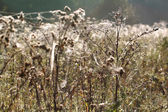 Field in the cobwebs — Stock Photo