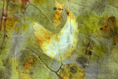 Distressed background with autumn leaves — Stock Photo