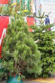 Photo green Christmas tree on New Year's Eve — Zdjęcie stockowe