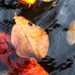 Yellow leaf floating on a pond — Stock Photo