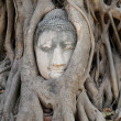 Buddha head in the tree roots — Foto Stock #39533997