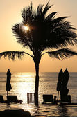 夕阳与棕榈树 — 图库照片