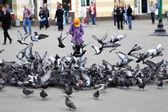 Flock of pigeons  — Stock Photo