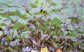Peces en el estanque — Foto de Stock