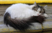 Fluffy cat photo — Stock Photo