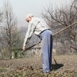 Elderly man cleans rake dry leaves in the garden — Stock Photo