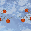 Постер, плакат: Basketballs are hanging on the trees against the sky