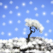 Lonely tree growing on a rock and the snowflakes falling on him — Stock Photo