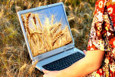 Girl holding a laptop in arms in wheat chain — Stock Photo