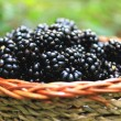 Fresh blackberry basket from the forest — Stock Photo #12301266