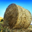 Roll of hay — Stock Photo