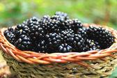 Kosz świeżych blackberry z lasu — Zdjęcie stockowe