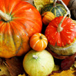 Assortment of autumn pumpkins - Stock Photo