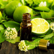 Stock Photo: Lime essence