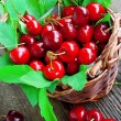Cherry fruits in a basket — Stock Photo
