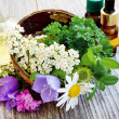 Stock Photo: Medicinal Plants
