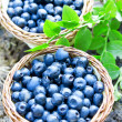 Blueberries baskets — Stock Photo