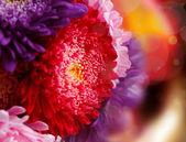 Chrysanthemum autumn flowers design — Stock Photo
