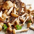 Fresh Armillaria mellea mushrooms — Stock Photo