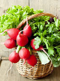 Radish and Greens in a Wicker Basket  — Stock Photo