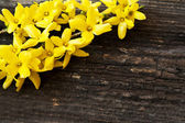 Yellow Flowers on Wooden Background — Photo