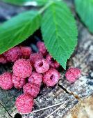 Fresh raspberry — Zdjęcie stockowe