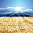 Beautiful wheat landscape - Foto de Stock