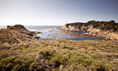 Point Lobos, Carmel, California — Stock Photo