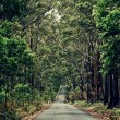 Stock Photo: Road in the forest