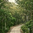 Road in the forest — Stock Photo #35622573