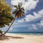 Beach and ocean — Stock Photo #37557411
