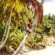 The man climbs on a palm tree — Stockfoto
