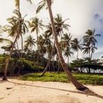 Beach and ocean — Stock Photo #37557439