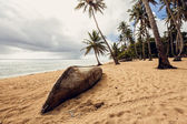 Old boat on beach — Stock Photo