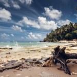 Beach and ocean, Dominican Republic — Stock Photo #37612779
