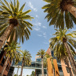 Stock Photo: Palms in Silicon Valley