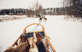 Sled dogs in Central Finland — Stock Photo