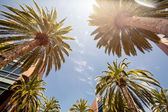Palms in Silicon Valley — Stock Photo