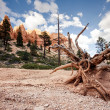 Bryce Canyon National Park — Stock Photo #39965715