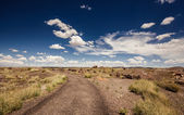 Petrified Forest National Park — Stock Photo