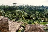 Rice terraces in Bali — Stock Photo