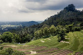Rice terraces in Bali — Stock Photo