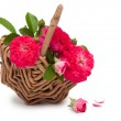 Basket with beautiful flowers — Stock Photo #8670855