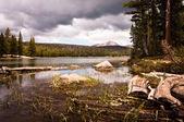 Dog lake — Stock Photo