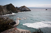 Seagull along the Pacific Coast Highway — Stock Photo