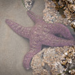 starfish — Stock Photo #32272895