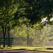 Mist in the park - Stock Photo