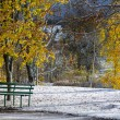 First snow in the park - Stock Photo